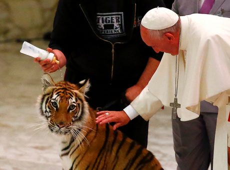Pope Francis caresses a tiger during a Jubilee audience for the circus performers and street artists in Paul VI Hall at the Vatican on June 16, 2016. Photo courtesy of REUTERS/Tony Gentile *Editors: This photo may only be republished with RNS-POPE-CIRCUS, originally transmittted on June 16, 2016.